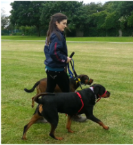 Elite dog training north london