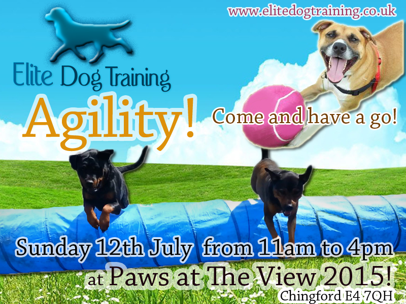 Dog Agility Training in Chingford near Station road